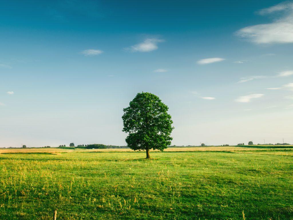 Vendita terreni edificabili a Treviso e provincia con progetto casa