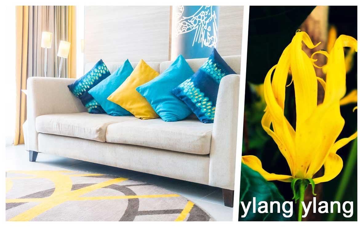 Profumare casa salotto: ylang ylang